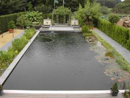 Read about fran ois 39 mammouth victoria cruziana in for Pool to koi pond conversion