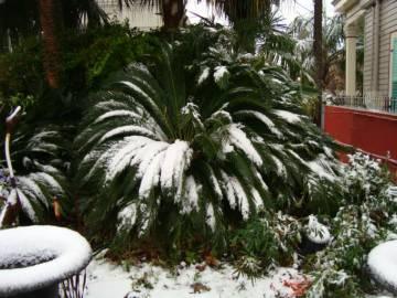 Snow At American Aquatic Gardens